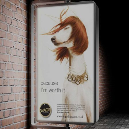 WAGS Advert Design Concept